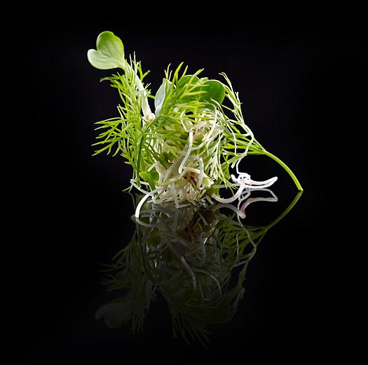 Sprouts Iwao Sueño Verde Gastronomy Photography