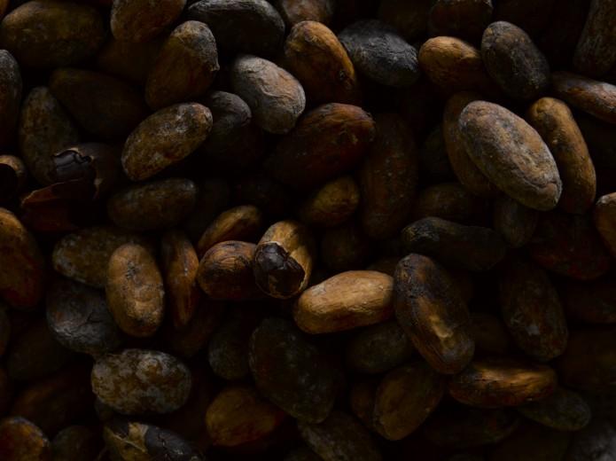 Fotografía de alimentos granos de cacao