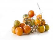 Fotografía de alimentos tomate